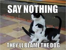 Funny Cat And Dog Memes - joke4fun memes be quiet