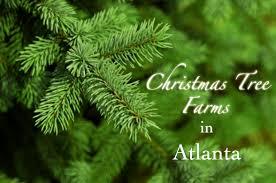 20 unforgettable christmas tree farms in atlanta you u0027ll adore