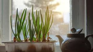 Window Sill Inspiration Amazing Of Window Sill Plants Inspiration With 5 Ways To Grow