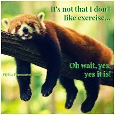 Red Panda Meme - 32 best save the red pandas images on pinterest red pandas
