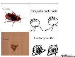Flying Cockroach Meme - cockroach true story by aidil95 meme center