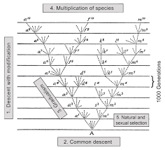 from the scala naturae to the symbiogenetic and dynamic tree of