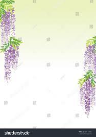wisteria flower vine background stock vector 586173746 shutterstock