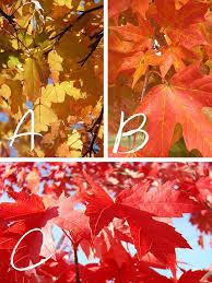 top 10 golden orange color posts on facebook