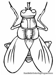 flies coloring page google search mad camp pinterest insects