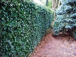 gallery green living fences