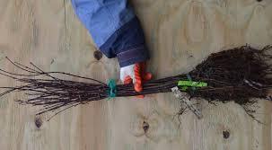 how to grow tree seedlings into beautiful trees