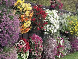 plant planters for flowers phenomenal flowers for shade planters