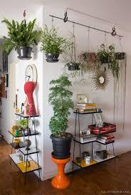 vocação vintage plants plant hangers and vintage