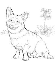 corgi coloring corgi coloring pages pinterest