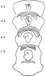 involvement of the dorsal periaqueductal gray in the loss of fear