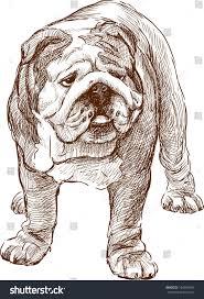 english bulldog stock vector 164564081 shutterstock