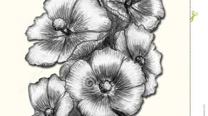 pencil sketch flower images flower drawings with pencil best