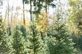 christmas tree u0026 wreath care instructions u2014 quail creek ranch