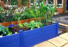 raised vegetable garden design layout garden raised veggie