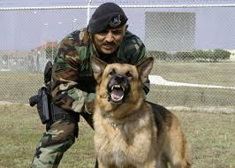 belgian shepherd navy seals military german shepherd titanium teeth dog and cat