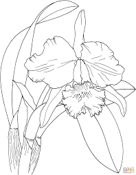 cattleya easter orchid super coloring invitaciones pinterest