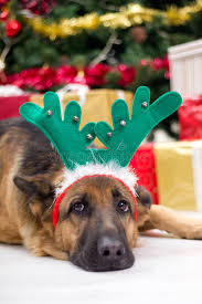 dog with deer antlers hat on christmas eve christmas tree and g