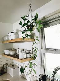 bathroom design awesome good bathroom plants plants good for the