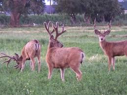 wildlife in my backyard fox31 denver