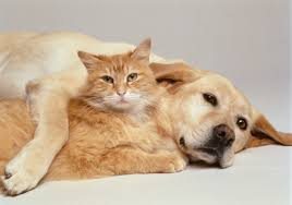 keppra for controlling seizures in dogs and cats