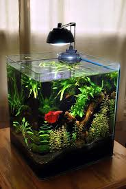 2 gallon pico aquarium gorgeous aquascape plants anubias nana