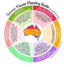 summer flower planting guide by regional zones australia great