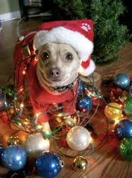 Christmas Dog Meme - 55 pictures of funny animals cutely enjoying christmas