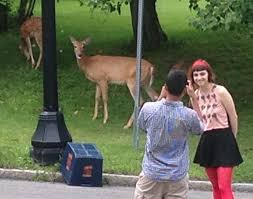 dec questions how ny communities kill deer other nuisance