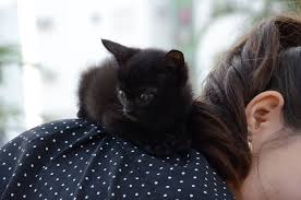 5 fascinating facts about black cats