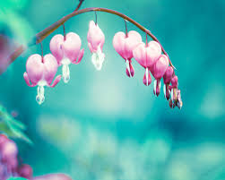 teal flowers flower photography teal aqua blue pink floral bleeding