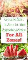 5 easy vegetables you can grow to save on your groceries gardens