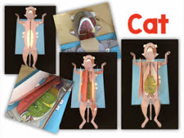 3 d paper dissection models for life science and biology