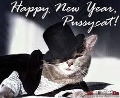Happy New Year Cat Meme - happy new year pussycat new year pinterest cat