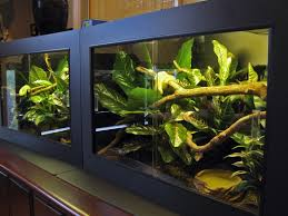 Terrarium Coffee Table by Best 20 Snake Cages Ideas On Pinterest Snake Terrarium Reptile