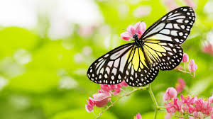 butterfly flowers the butterfly and flower relaxing piano hd 1080p