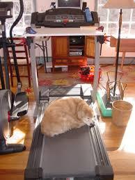 Desk Treadmill Diy Did You Make A Diy Treadmill Walking Desk Suddenly Frugal