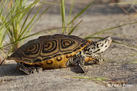 deep turtles connecticut