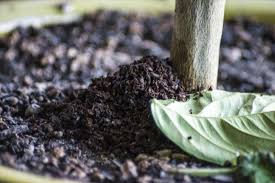 Coffee Grounds In Vegetable Garden by 5 Reasons Why You Should Never Throw Out Used Coffee Grounds