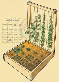 plant a compact vegetable garden u2013 boys u0027 life magazine