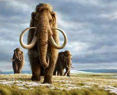 10 facts wild woolly mammoth extinct prehistoric