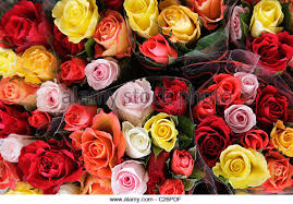 roses for sale roses for sale stock photos roses for sale stock images alamy