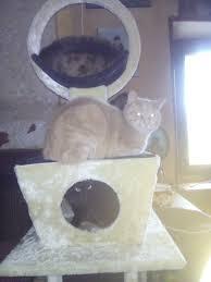 comment fabriquer un arbre a chat poteau de rechange pour arbre à chat arbre à chat
