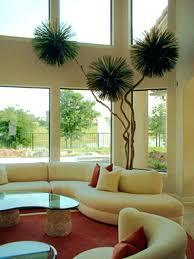 decorative indoor plants decorative indoor plants beautiful interior with indoor plant