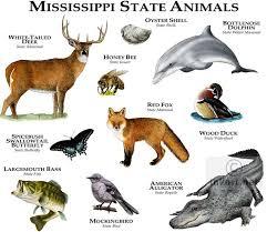 Mississippi wild animals images 1083 best animals images wild animals animal jpg