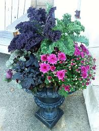 867 best flowers gardens containers perennials annuals