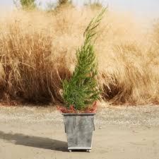 outdoor planters pots terrain