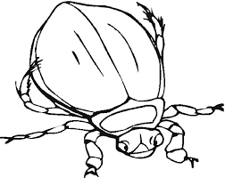 free bug insect coloring pages