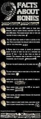 Anatomy Of Human Body Bones Best 25 Human Body Bones Ideas On Pinterest Body Bones Bones