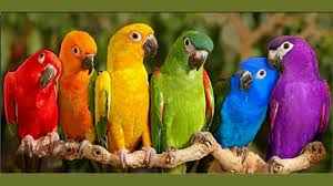 image gallery birds